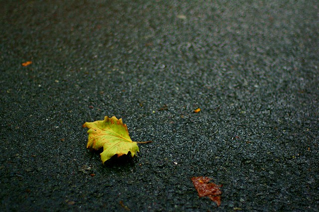 first sign of autumn...