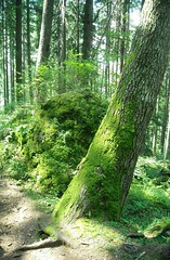 Another mossy tree