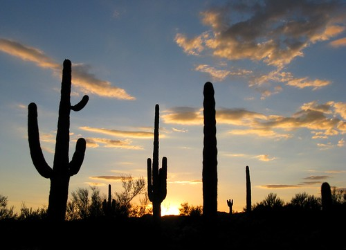 sunset arizona cactus sky southwest nature beauty clouds outdoors visions solitude peace desert sundown silhouettes explore backlit saguaro exploration sonorandesert lookingwest maricopacounty canonpowershota720is zoniedude1 hieroglyphicmountains earthnaturelife amomentofglory