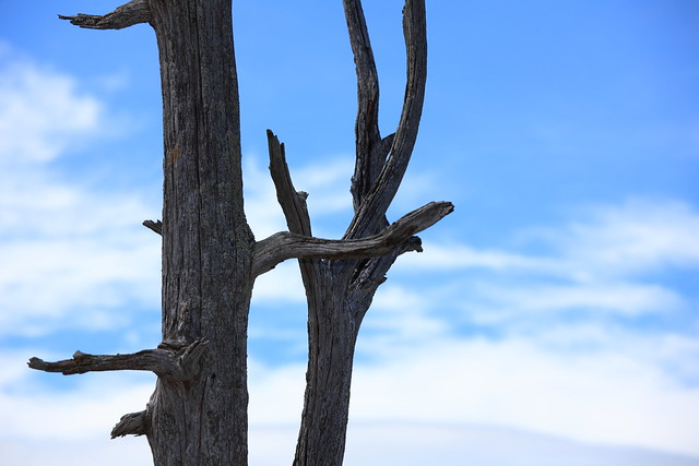 Trees / 木(き)