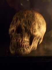 Scary Skull with No Eyes