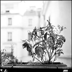 De la fenêtre