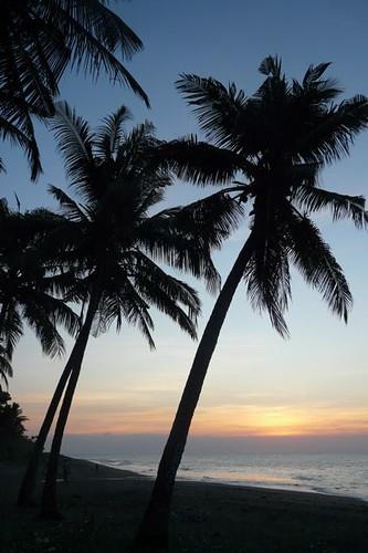 sunset tree beach evening asia palm timor leste pantai easttimor dili matahari timorleste sekitar terbenam earthasia osttimor