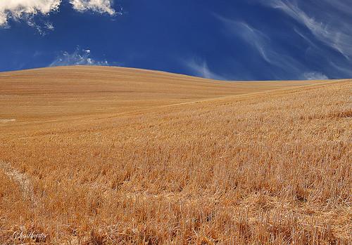 blue sky france colors clouds gold corn nuvole blu hill cielo provence colori francia collina ohhh oro provenza grano ghostbuster flickrcolour gigi49 gigilivornosfriends