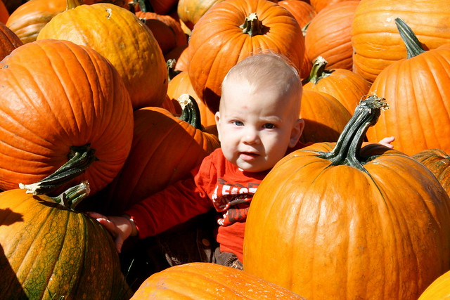 In the pumpkins