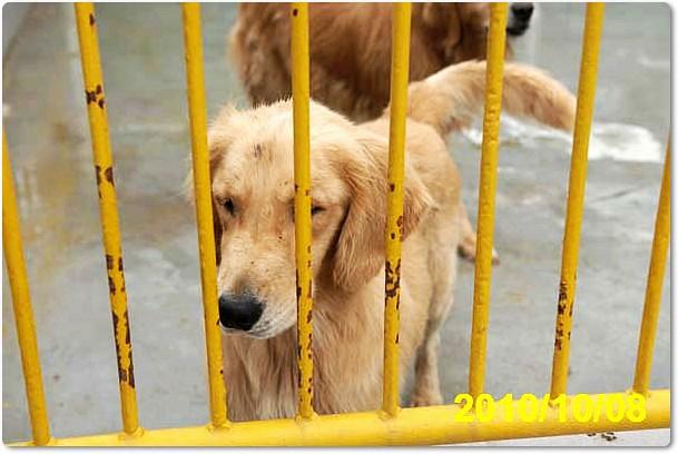 Dog Cbc Show Liver Issue