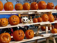 Pumpkin skulls