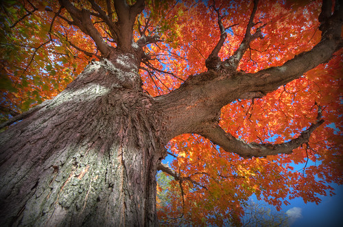 autumn ohio tree fall nature leaves nikon raw nef foliage bark hdr photomatixpro barbertonohio d3s nikkor1424f28