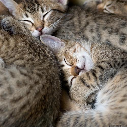 A Sleep 4
