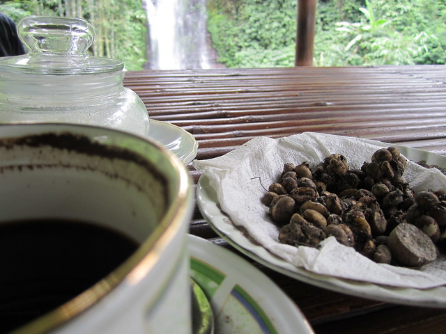 civet cat coffee