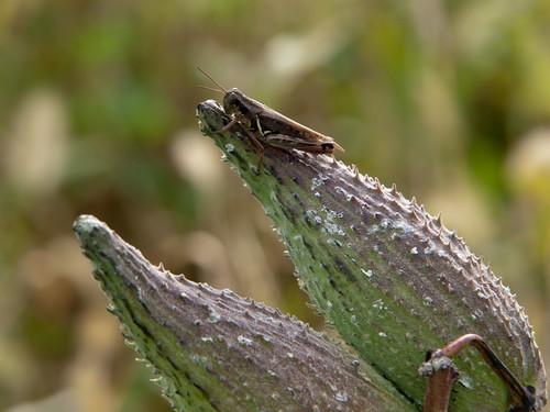 pennsylvania olympus pa zuiko ep2 chestercounty kennettsquare 14150mm bucktoenaturepreserve