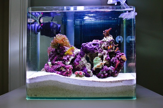 4 gallon pico reef flickr photo sharing for 20 gallon saltwater fish tank