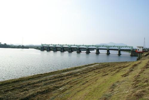 大河津分水の魚道