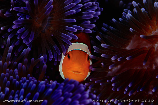 5126617797 b9ee244b13 z Photographers Who Found Nemo And Photographed It