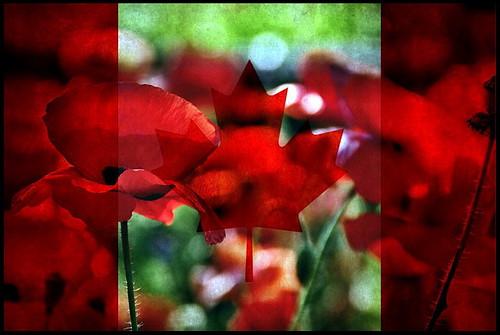 canada afghanistan unitedstates wwi wwii iraqwar spanishcivilwar koreanwar veteransday rememberanceday spanishamericanwar vietnamwar uppercanada worldwars warofindependance ongoingconflicts