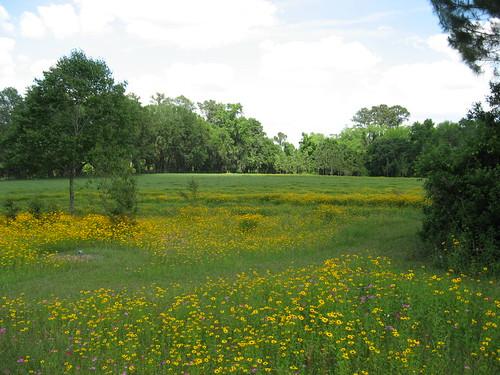 florida native wildflower