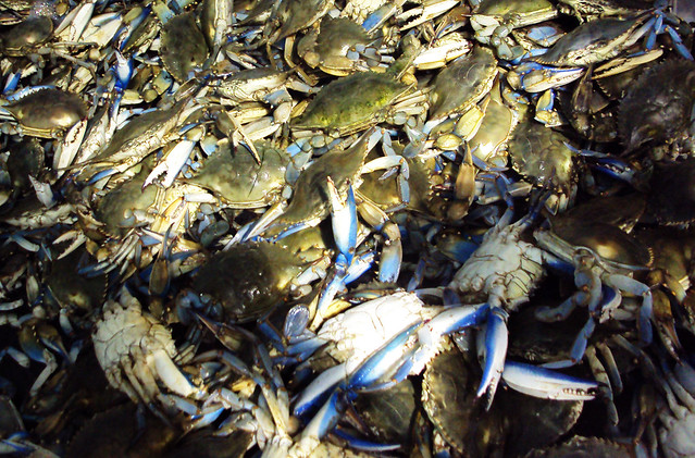 Seafood market seabrook texas 1120101545 explore for Kemah fish market