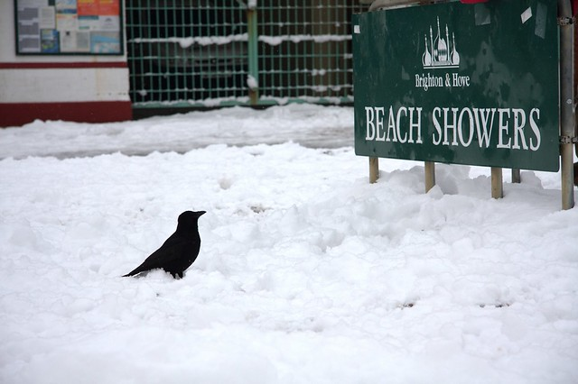 Beach Showers Crow