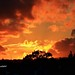 Burning forest or sunset? by cpscoa