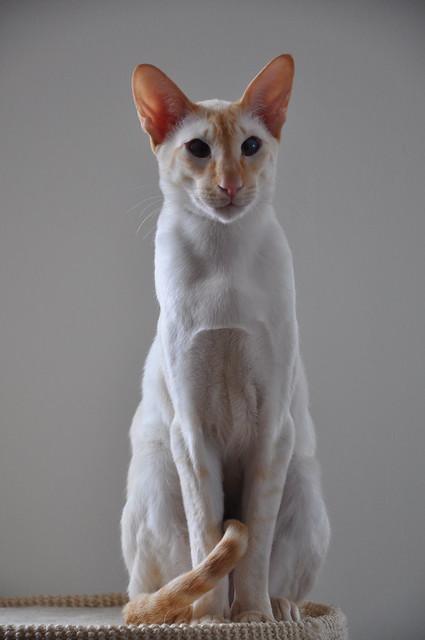cat 994 loader
