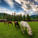 Horses on an Evening Meadow by Stuck in Customs