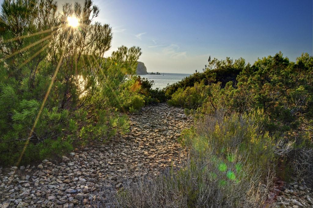 Vegetazione in Cala Comte (Ibiza)