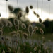 Small photo of Grasses, Brittany, France