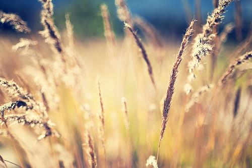 grass backlight glow bokeh d700 florabellaaction 2010yip