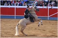 western riding(0.0), dressage(0.0), show jumping(0.0), bullring(0.0), animal training(0.0), matador(0.0), bullfighting(0.0), barrel racing(0.0), animal sports(1.0), equestrianism(1.0), english riding(1.0), stallion(1.0), jumping(1.0), equestrian sport(1.0), sports(1.0), western pleasure(1.0), horse(1.0), horse harness(1.0), performance(1.0),