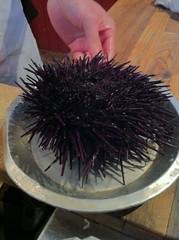 sea urchin(1.0), echinoderm(1.0),