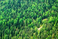 Wald im Val Sinestra