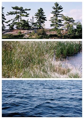 ontario canada film water grass forest landscape 1 triptych fuji superia collages picasa olympus shore 35mmfilm 400 om om1 stmarysriver richardslanding 50mmzuiko shoalisland matthewsisland