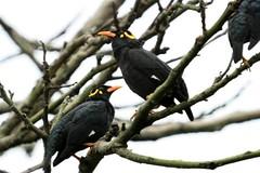 eurasian golden oriole(0.0), animal(1.0), branch(1.0), fauna(1.0), finch(1.0), beak(1.0), blackbird(1.0), bird(1.0), wildlife(1.0),