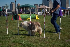 herding(0.0), dog sports(1.0), animal sports(1.0), dog(1.0), sports(1.0), pet(1.0), conformation show(1.0), dog agility(1.0),