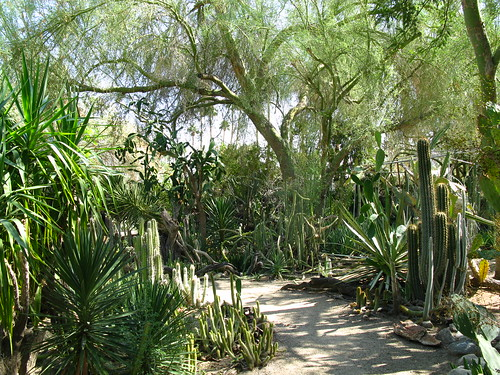 My Back 40 Feet Palm Springs Part 2 Moorten Botanical Garden