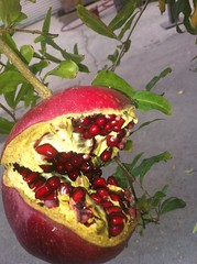 flower(0.0), plant(0.0), produce(0.0), food(0.0), pomegranate(1.0), fruit(1.0),