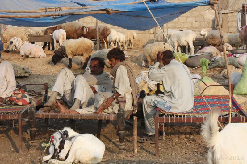 Goat Vendor