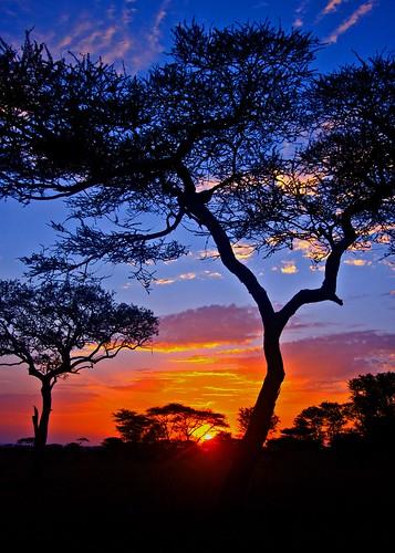 africa sunrise canon tanzania dawn serengeti breathtaking serengetti 50d mywinners hbppix breathtakinggoldaward bestcapturesaoi breathtakinghalloffame tripleniceshot mygearandmepremium mygearandmebronze mygearandmesilver mygearandmegold celebritiesofphotographyforrecreation