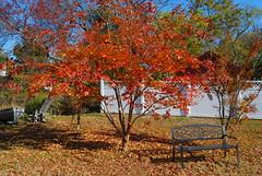 Fall from My Mom's Backyard