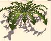 Shadow of Dandelion Leaf