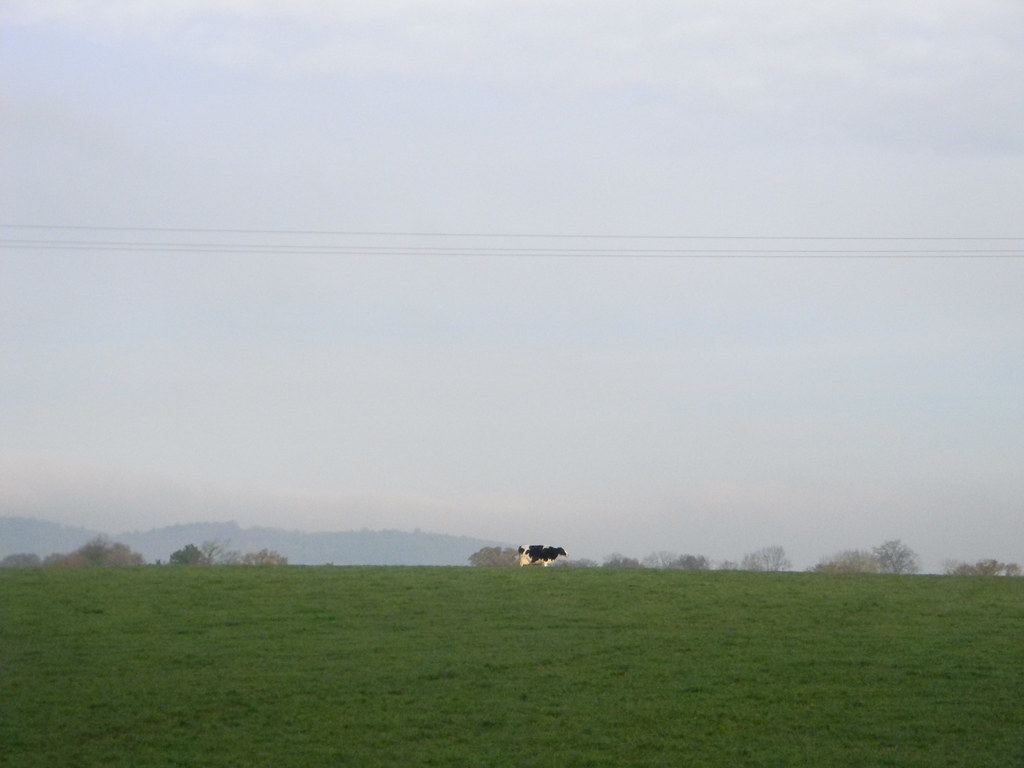 Cow Ockley to Warnham