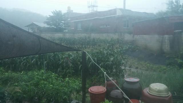 아침풍경 | 비구름에서 폭우로