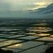 1270 Flooded fields--Xiapu , Fujian Province , China