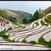 Longji Rice Terraces, Longsheng, China by ILYA GENKIN / GENKIN.ORG