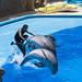 Delfinario de Palmitos Park.Gran Canaria
