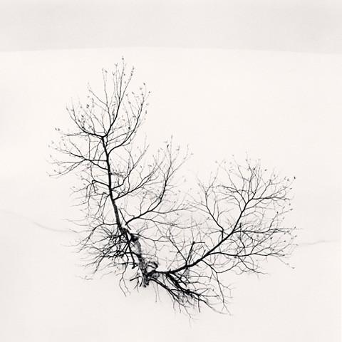 Ayako's Tree, Higashikura, Hokkaido, by Michael Kenna 2008