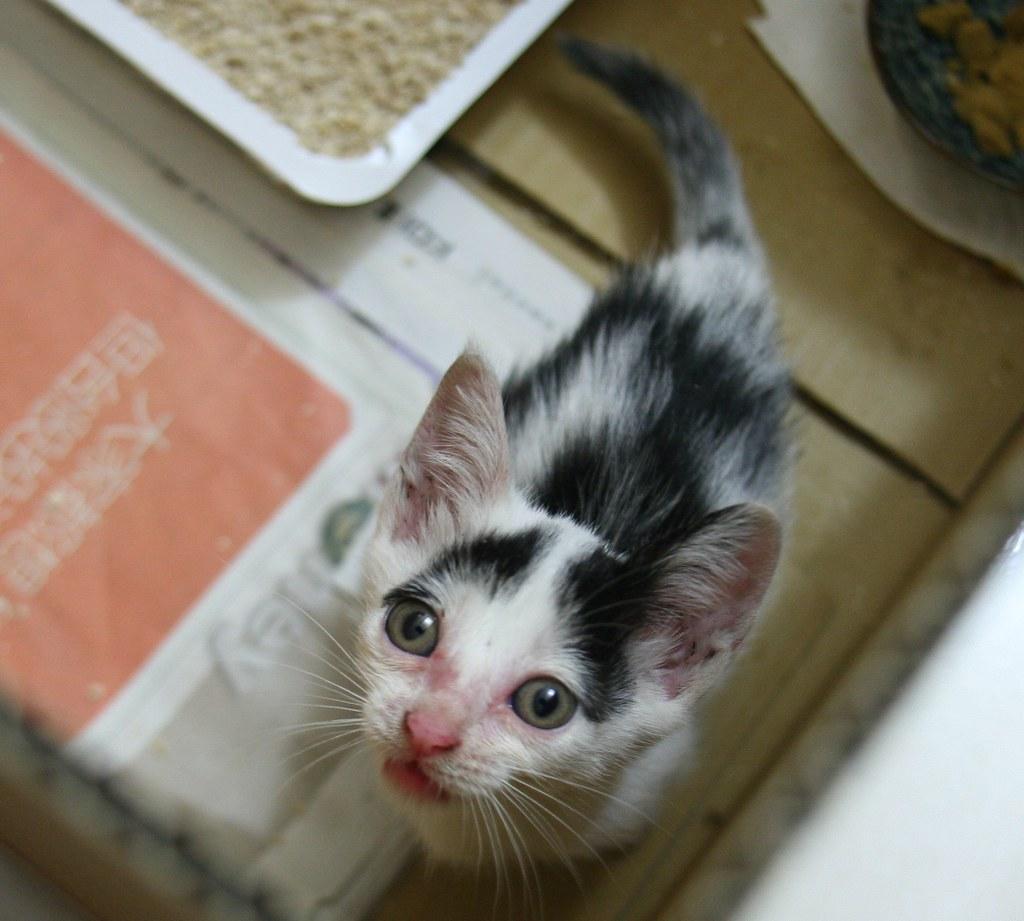20100621-01撿到的小貓