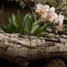 La casa de las Orquideas.Palmitos Park.Gran Canaria