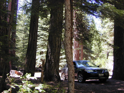 Giant Sequoias, 4x4 not required