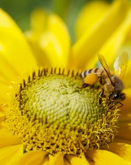 Photograph: Is that pollen in your pocket?